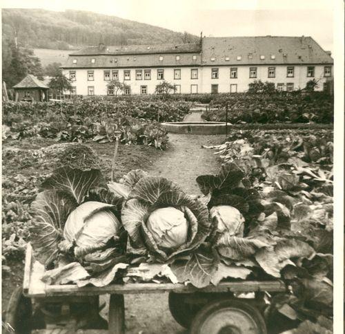 Bild:Gärtnerei Schloss Römershag um 1955
